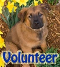 animal_shelter_volunteer